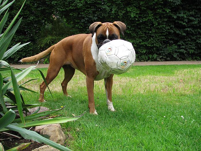 Fussball EM Hund