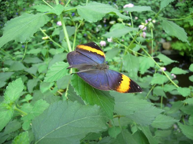 Schmetterlinge Friedrichsruh