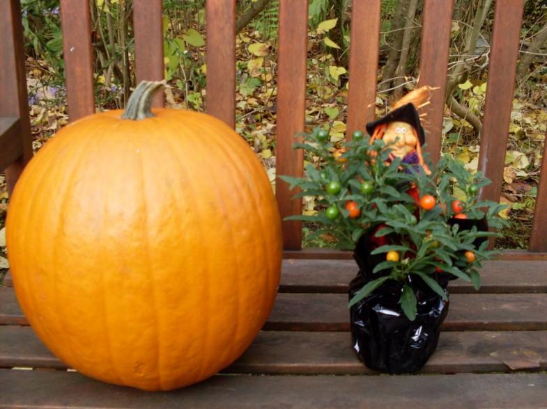 Halloween Kürbis pumpkin
