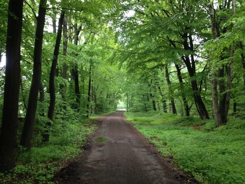 Frühling Wald